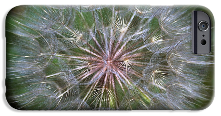 Dandelion IPhone 6 Case featuring the photograph Big Wish by Linda Sannuti