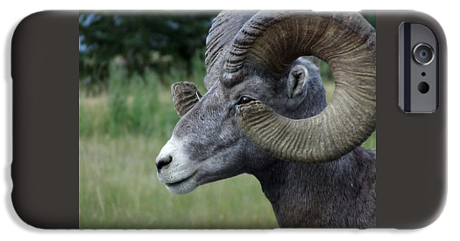 Big Horned Ram IPhone 6 Case featuring the photograph Bighorned Ram by Tiffany Vest