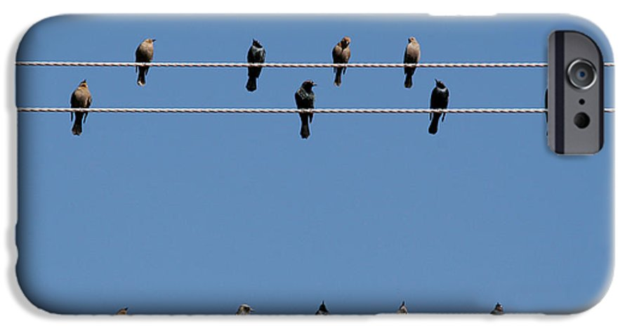 Birds IPhone 6 Case featuring the photograph Bird On A Wire by Christine Till