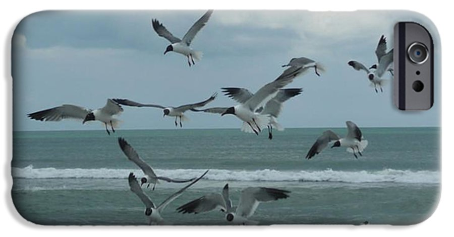 Birds IPhone 6 Case featuring the photograph Birds In Flight by Barb Montanye Meseroll