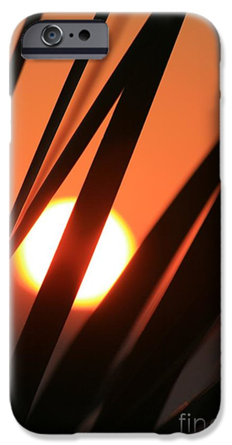 Sun IPhone 6 Case featuring the photograph Blazing Sunset And Grasses by Nadine Rippelmeyer