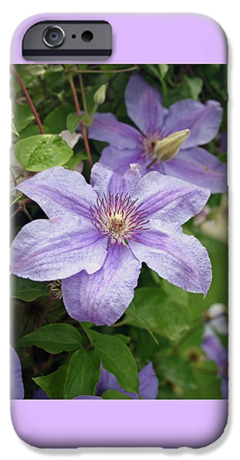 Clematis IPhone 6 Case featuring the photograph Blue Clematis by Margie Wildblood