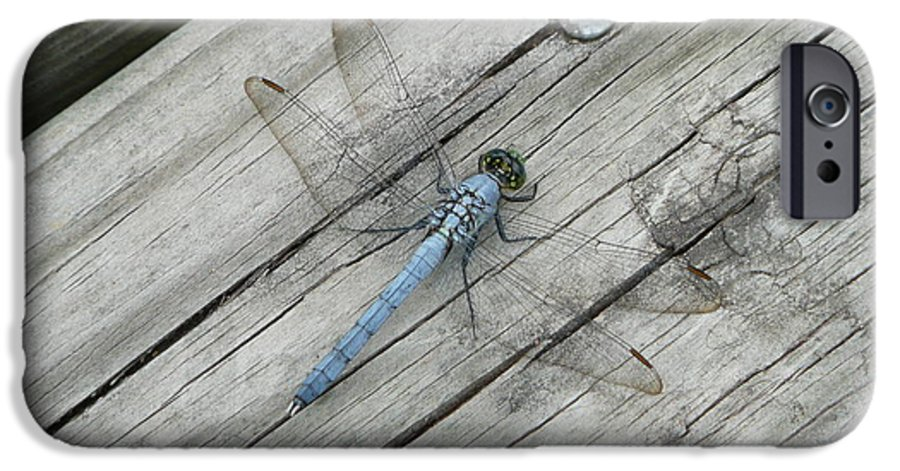 Dragonfly IPhone 6 Case featuring the photograph Blue Dragonfly by Kathy Schumann