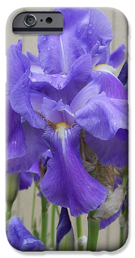Flowers IPhone 6 Case featuring the photograph Blue Iris by Laurie Kidd