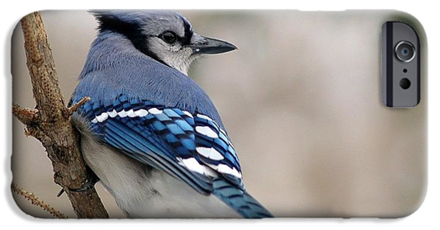 Blue Jay IPhone 6 Case featuring the photograph Blue Jay by Gaby Swanson
