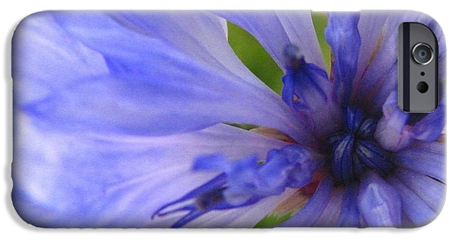 Flower IPhone 6 Case featuring the photograph Blue Princess by Rhonda Barrett