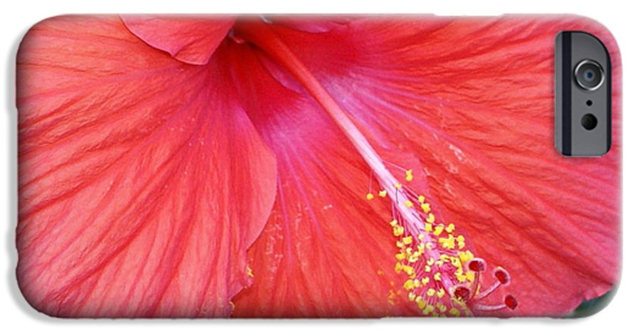 Flowers IPhone 6 Case featuring the photograph Blushing Stamen by Debbie May