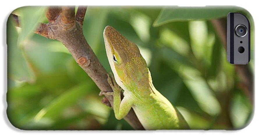 Lizard IPhone 6 Case featuring the photograph Blusing Lizard by Shelley Jones