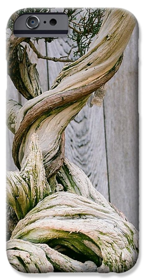Tree IPhone 6 Case featuring the photograph Bonsai by Dean Triolo