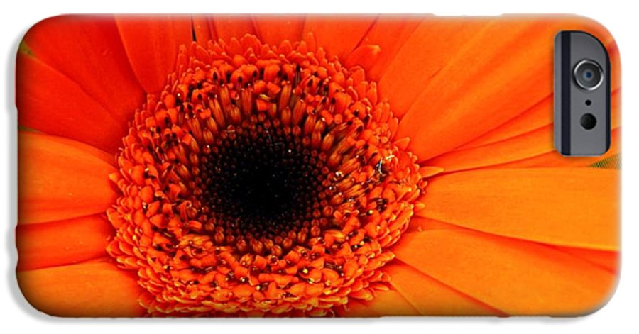 Flower IPhone 6 Case featuring the photograph Bright Red by Rhonda Barrett