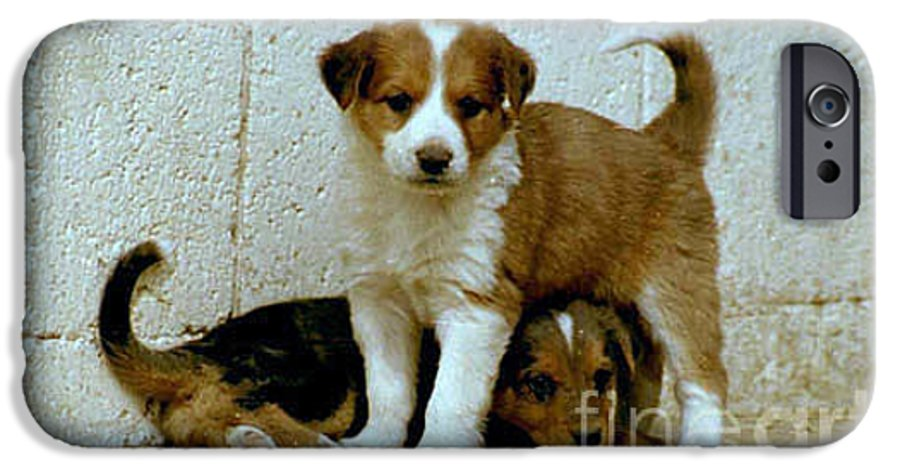 Puppies IPhone 6 Case featuring the photograph Brothers by Kathy McClure