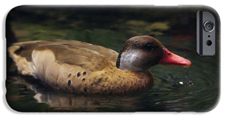 Duck IPhone 6 Case featuring the photograph Brown Duck by Kenna Westerman