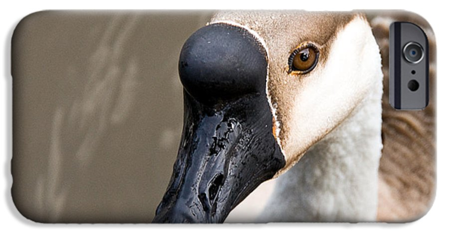 Chinese Brown Goose IPhone 6 Case featuring the photograph Brown Eye by Christopher Holmes