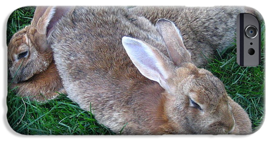Rabbit IPhone 6 Case featuring the photograph Brown Rabbits by Melissa Parks