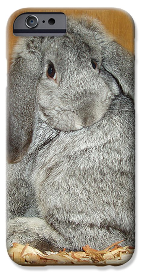 Bunny IPhone 6 Case featuring the photograph Bunny by Gina De Gorna