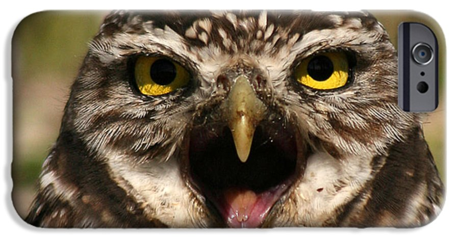 Owl IPhone 6 Case featuring the photograph Burrowing Owl Eye To Eye by Max Allen