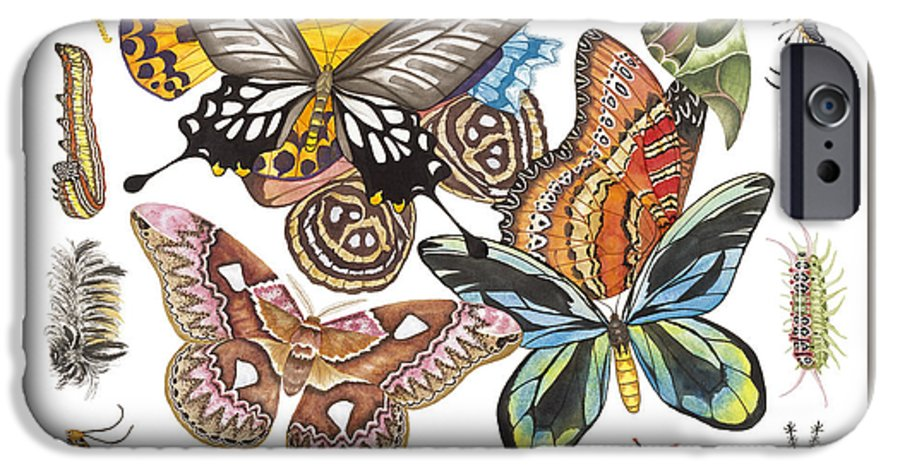 Butterflies IPhone 6 Case featuring the painting Butterflies Moths Caterpillars by Lucy Arnold