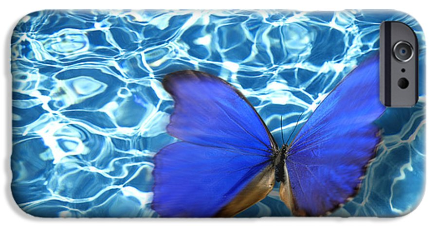 Animals IPhone 6 Case featuring the photograph Butterfly by Tony Cordoza