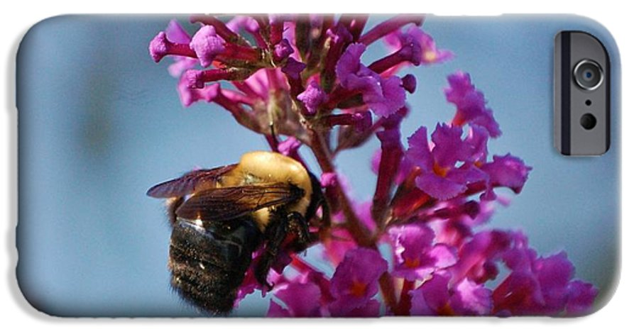 Bee IPhone 6 Case featuring the photograph Buzzed by Debbi Granruth