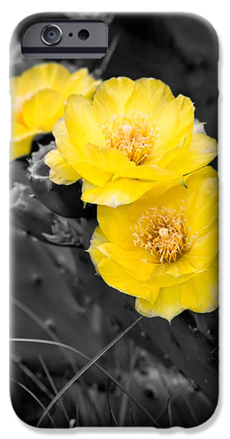 Cactus IPhone 6 Case featuring the photograph Cactus Blossom by Christopher Holmes