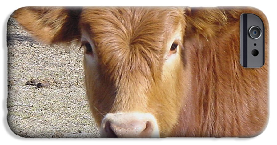 Farm IPhone 6 Case featuring the painting Calf Smiles by Debbie May