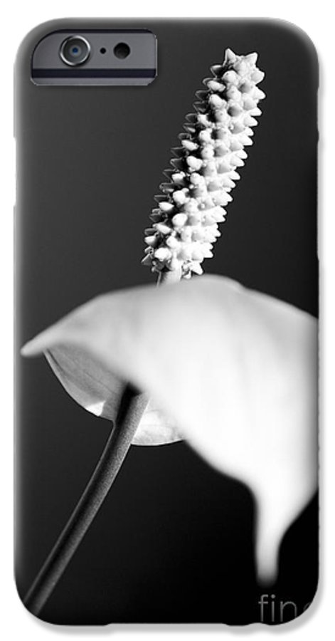Black & White IPhone 6 Case featuring the photograph Calla Lily by Tony Cordoza
