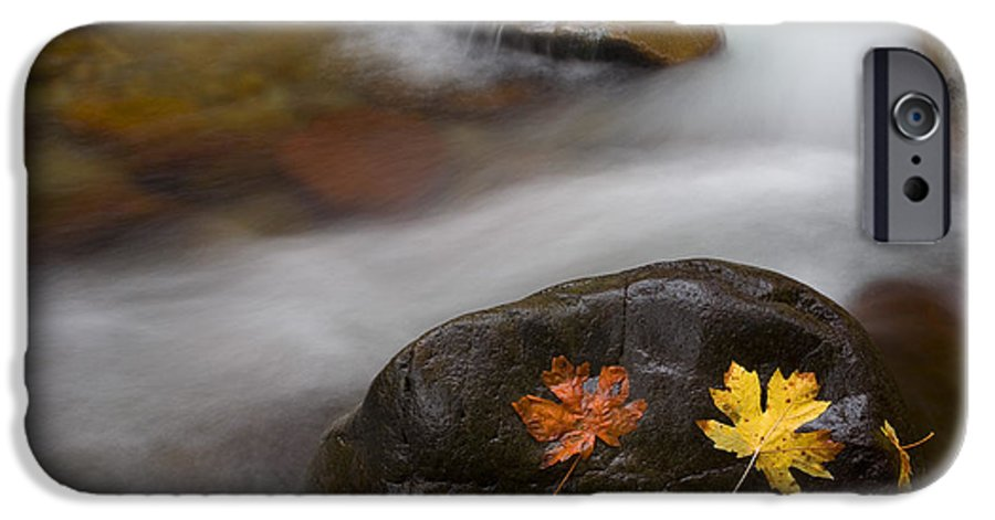 Leaves IPhone 6 Case featuring the photograph Castaways by Mike Dawson