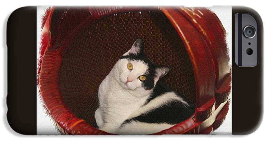 Cat IPhone 6 Case featuring the photograph Cat In A Basket by Margie Wildblood