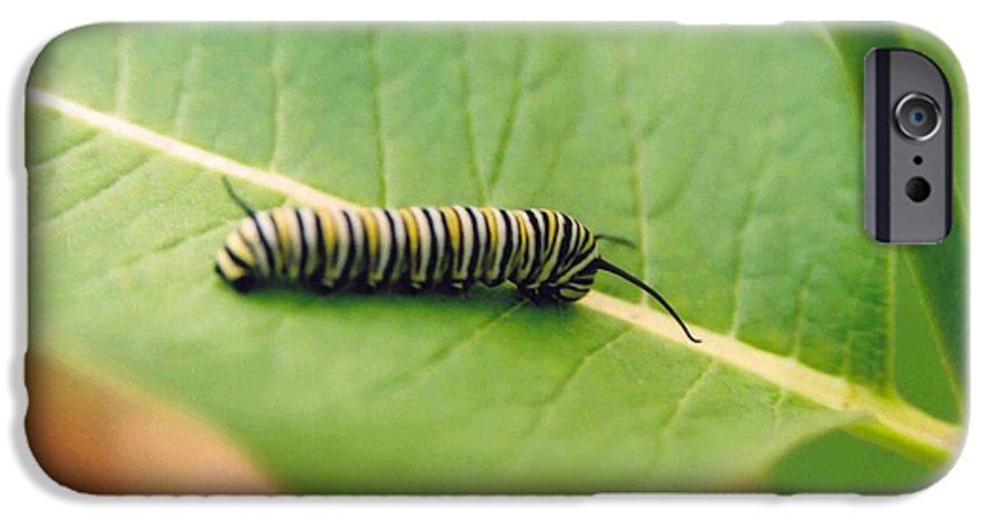 Caterpillar IPhone 6 Case featuring the photograph Caterpillar by Kathy Schumann
