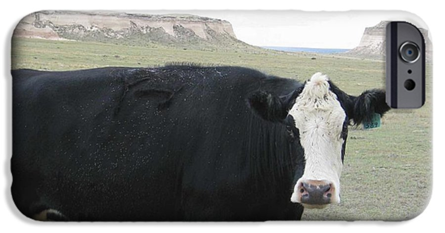 Rural IPhone 6 Case featuring the photograph cattle at Pawnee Butte Colorado by Margaret Fortunato
