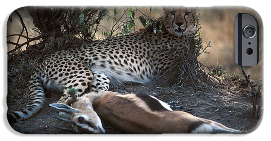 Spots IPhone 6 Case featuring the photograph Cheetah With Kill by Carl Purcell