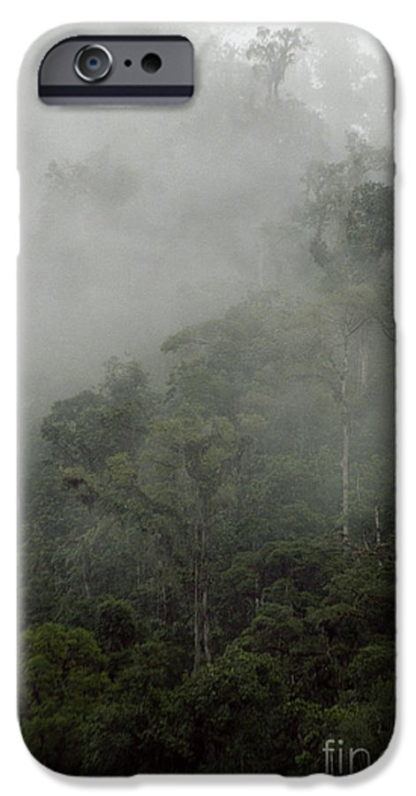 Rainforest IPhone 6 Case featuring the photograph Cloud Forest by Kathy McClure