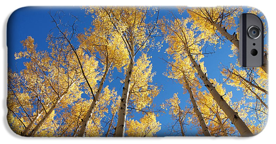 Aspen IPhone 6 Case featuring the photograph Colorado Aspen by Jerry McElroy