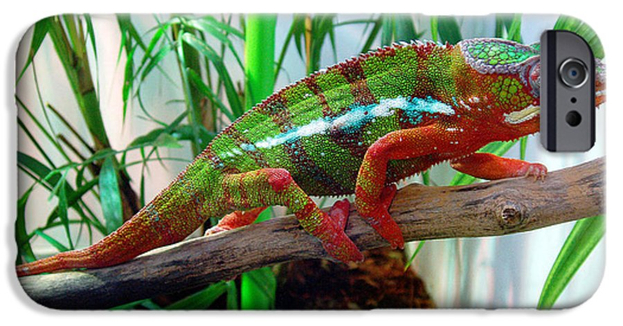 Chameleon IPhone 6 Case featuring the photograph Colorful Chameleon by Nancy Mueller