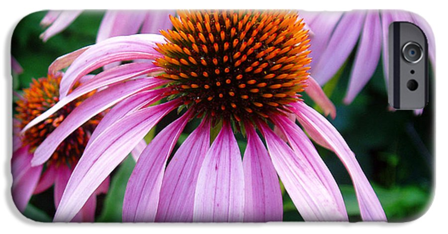 Coneflowers IPhone 6 Case featuring the photograph Three Coneflowers by Nancy Mueller