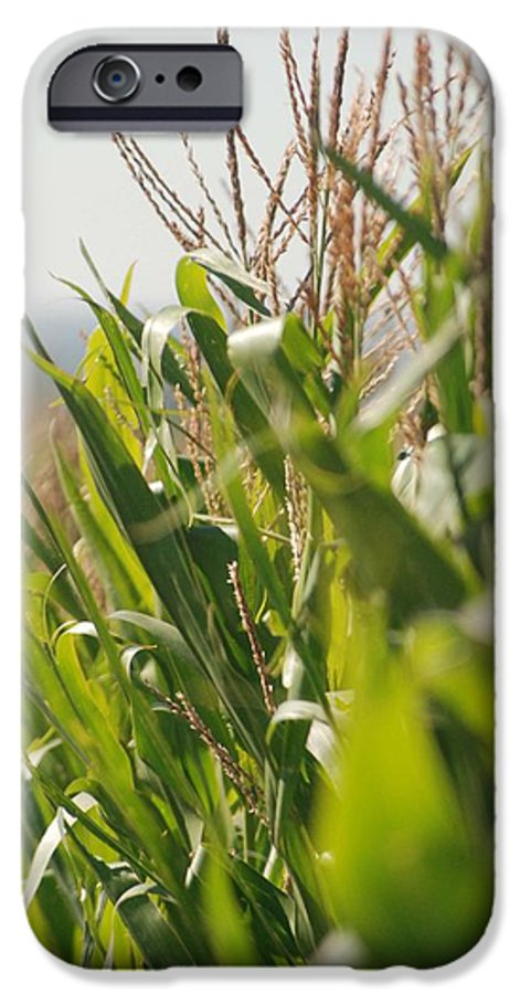 Corn IPhone 6 Case featuring the photograph Corn Country by Margaret Fortunato