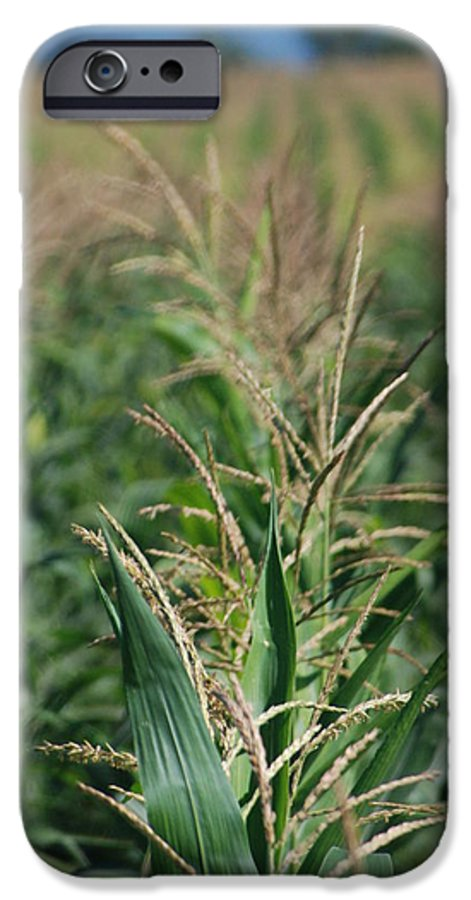 Country IPhone 6 Case featuring the photograph Corn Rows by Margaret Fortunato