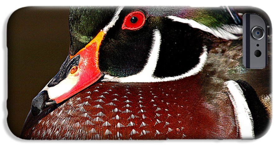 Duck IPhone 6 Case featuring the photograph Courtship Colors Of A Wood Duck Drake by Max Allen