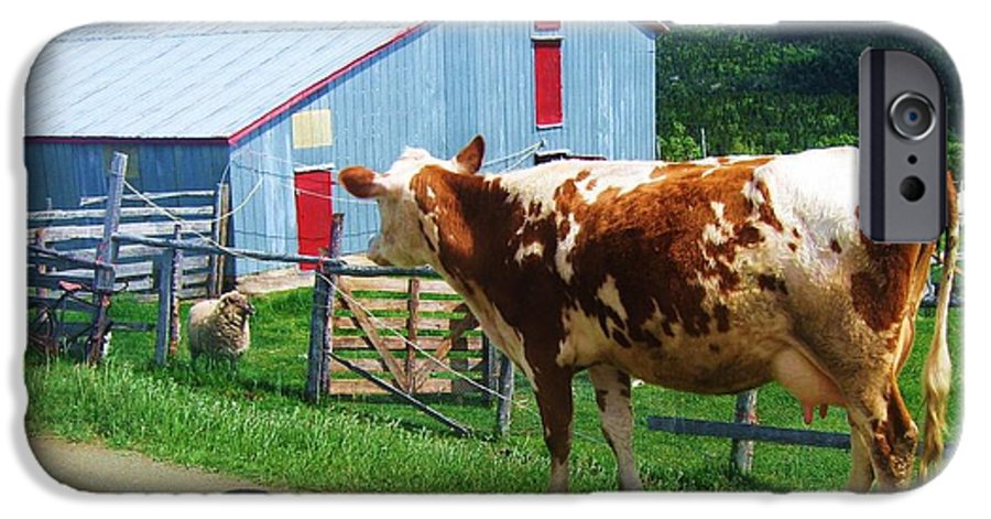 Photograph Cow Sheep Barn Field Newfoundland IPhone 6 Case featuring the photograph Cow Sheep And Bicycle by Seon-Jeong Kim