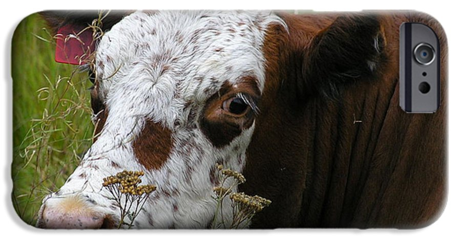 Tongue IPhone 6 Case featuring the photograph Cow Tongue by Louise Magno