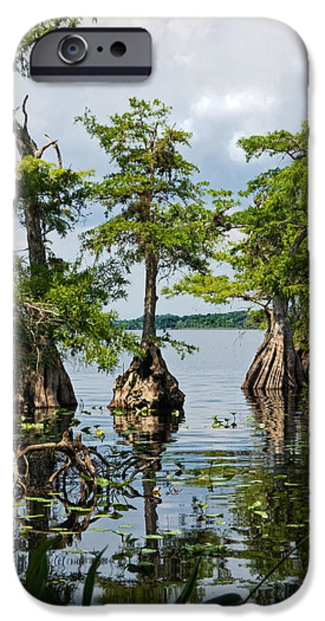 Trees IPhone 6 Case featuring the photograph Cypress Reflections by Christopher Holmes