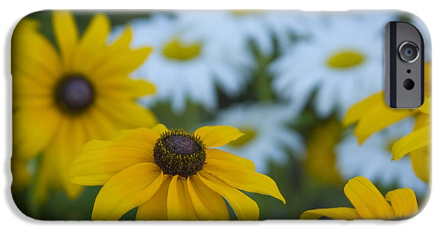 Daisy IPhone 6 Case featuring the photograph Daisies by Idaho Scenic Images Linda Lantzy