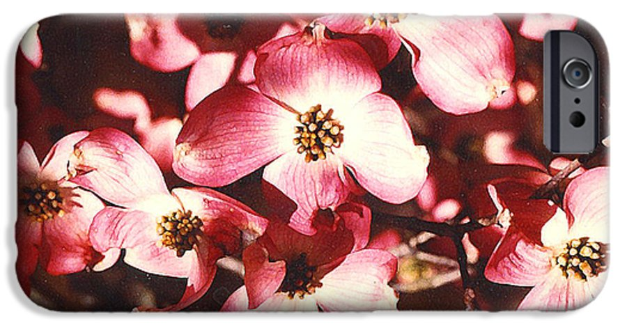 Dogwood IPhone 6 Case featuring the photograph Dogwood Harmony by Nancy Mueller