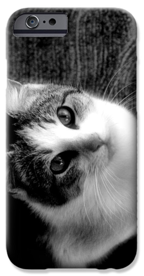 Cat IPhone 6 Case featuring the photograph Don't Ever Leave by Gaby Swanson