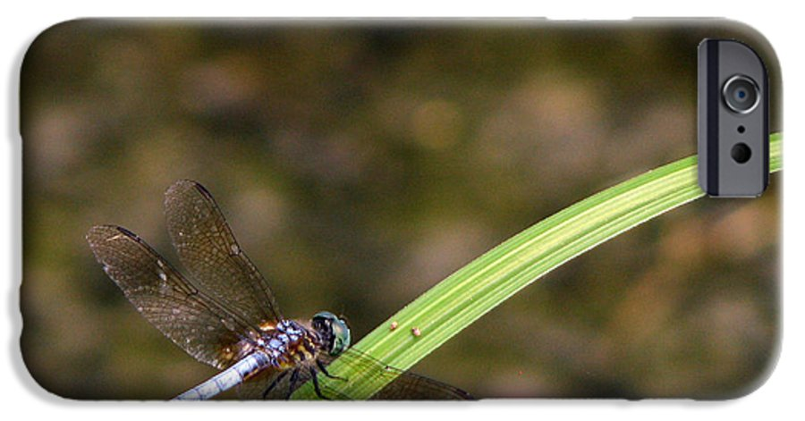 Dragonfly IPhone 6 Case featuring the photograph Dragonfly by Amanda Barcon