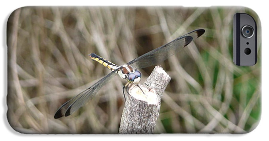 Wildlife IPhone 6 Case featuring the photograph Dragonfly I by Kathy Schumann