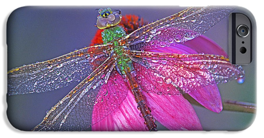 Dew Covered Dragonfly Rests On Purple Cone Flower IPhone 6 Case featuring the photograph Dreaming Dragon by Bill Morgenstern