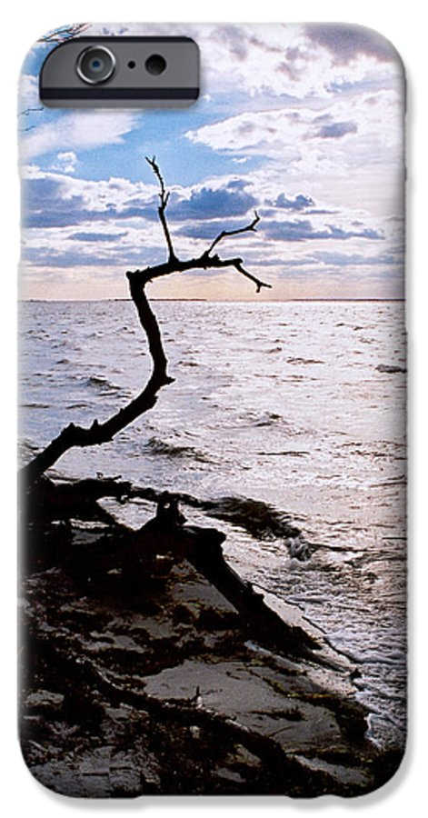 Barnegat IPhone 6 Case featuring the photograph Driftwood Dragon-barnegat Bay by Steve Karol
