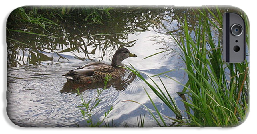 Duck IPhone 6 Case featuring the photograph Duck Swimming In Stream by Melissa Parks