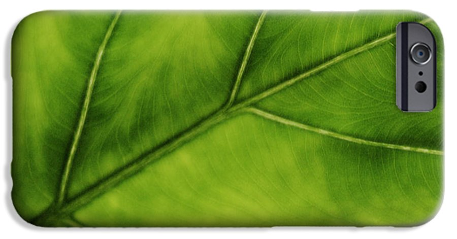 Leaf IPhone 6 Case featuring the photograph Elephant Ear by Marilyn Hunt